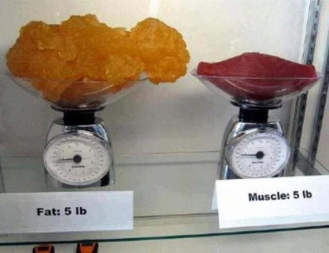 фото 1 кг жира и 1 кг мышц