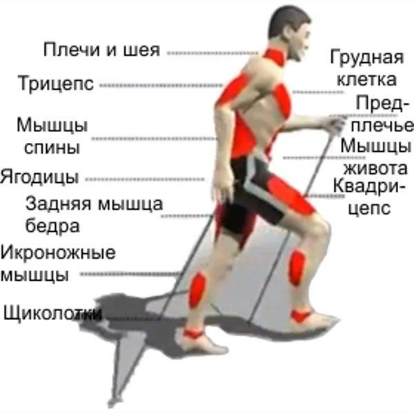 выглядит какие мышцы работают при беге фото получил